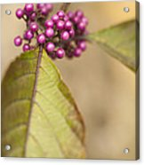 New Berries Acrylic Print