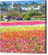 New Carlsbad Flower Fields Acrylic Print