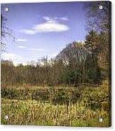 New England Wetland Acrylic Print