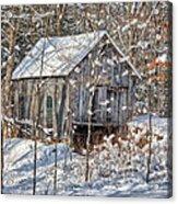 New England Winter Woods Acrylic Print