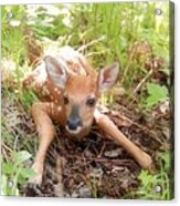 New Fawn In The Forest Acrylic Print