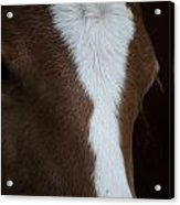New Filly Acrylic Print by Kelly Kitchens