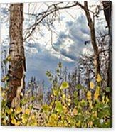 New Generation - Casper Mountain - Casper Wyoming Acrylic Print