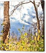 New Generation - Mixed Media - Casper Mountain - Casper Wyoming Acrylic Print