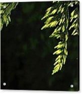 New Growth 25866 Acrylic Print