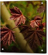 New Leaves For Napanee Acrylic Print
