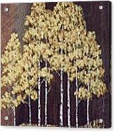 New Mexico Aspens 1 Acrylic Print