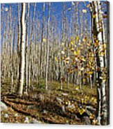 New Mexico Series -  Bare Autumn Acrylic Print
