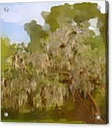New Orleans Spanish Moss On Live Oaks Acrylic Print by Christine Till