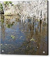 New Orleans - Swamp Boat Ride - 1212104 Acrylic Print