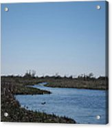New Orleans - Swamp Boat Ride - 1212107 Acrylic Print