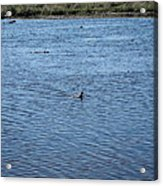 New Orleans - Swamp Boat Ride - 1212108 Acrylic Print