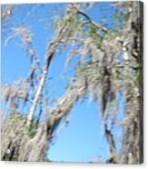 New Orleans - Swamp Boat Ride - 1212127 Acrylic Print