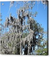 New Orleans - Swamp Boat Ride - 1212128 Acrylic Print