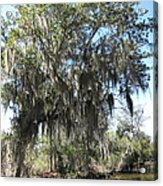 New Orleans - Swamp Boat Ride - 1212129 Acrylic Print