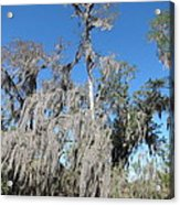 New Orleans - Swamp Boat Ride - 1212138 Acrylic Print