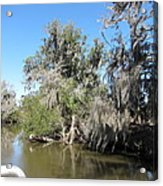 New Orleans - Swamp Boat Ride - 1212141 Acrylic Print