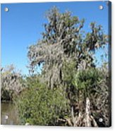 New Orleans - Swamp Boat Ride - 1212144 Acrylic Print