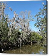 New Orleans - Swamp Boat Ride - 1212146 Acrylic Print