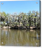 New Orleans - Swamp Boat Ride - 1212150 Acrylic Print