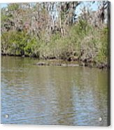 New Orleans - Swamp Boat Ride - 1212157 Acrylic Print