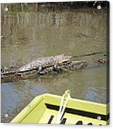 New Orleans - Swamp Boat Ride - 1212160 Acrylic Print