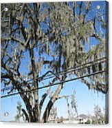 New Orleans - Swamp Boat Ride - 12122 Acrylic Print by DC Photographer