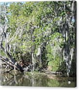New Orleans - Swamp Boat Ride - 121231 Acrylic Print