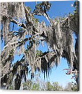 New Orleans - Swamp Boat Ride - 121238 Acrylic Print