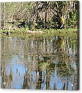 New Orleans - Swamp Boat Ride - 121249 Acrylic Print