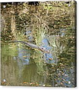 New Orleans - Swamp Boat Ride - 121252 Acrylic Print