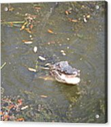 New Orleans - Swamp Boat Ride - 121255 Acrylic Print