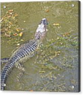 New Orleans - Swamp Boat Ride - 121258 Acrylic Print