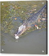 New Orleans - Swamp Boat Ride - 121260 Acrylic Print