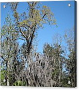 New Orleans - Swamp Boat Ride - 121265 Acrylic Print