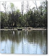 New Orleans - Swamp Boat Ride - 121272 Acrylic Print