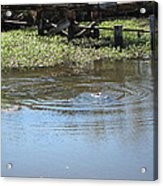 New Orleans - Swamp Boat Ride - 121275 Acrylic Print