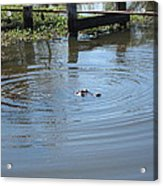 New Orleans - Swamp Boat Ride - 121276 Acrylic Print