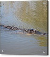 New Orleans - Swamp Boat Ride - 121281 Acrylic Print