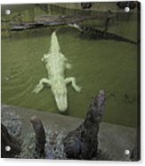 New Orleans - Swamp Boat Ride - 12129 Acrylic Print
