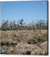 New Orleans - Swamp Boat Ride - 121292 Acrylic Print