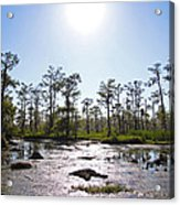 New Orleans Swamp Untouched Acrylic Print