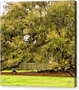 New Orleans' Tree Of Life 2 Paint Acrylic Print