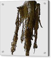 New Photographic Art Print For Sale   Day Of The Dead Skeleton On A Stick Acrylic Print