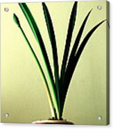 Fanned Leaves Of An Amaryllis Acrylic Print