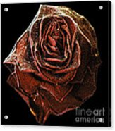 Perfect Gothic Red Rose Acrylic Print