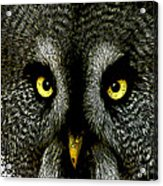 New Photographic Art Print For Sale   Great Grey Owl Acrylic Print