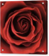 Close Up Heart Of A Red Rose Acrylic Print