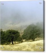 Mist In The Californian Valley Acrylic Print