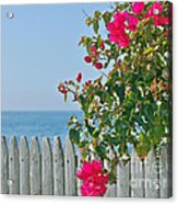 New Photographic Art Print For Sale On The Fence Montecito Bougainvillea Overlooking The Pacific Acrylic Print